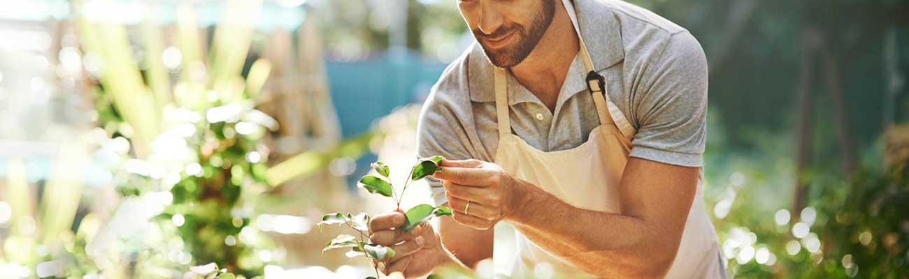 Для чего нужны услуги профессионального садовника