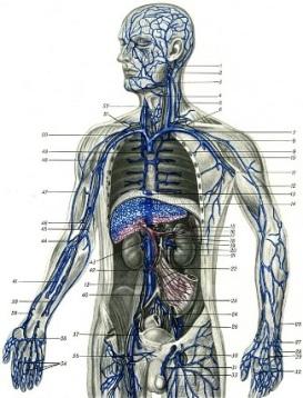 резюме диетолога