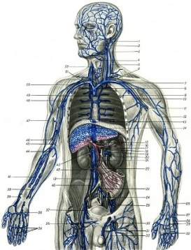 Флеболог - специалист по лечению вен.